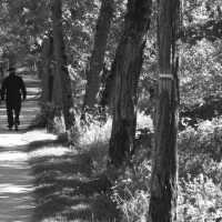 Suivant son chemin-- (Série de photos)