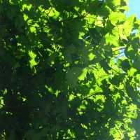 Contraste végétal-- (Série de photos)